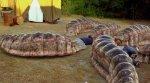 mongoliandeathworms.jpg